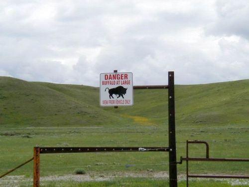 Buffalo at Large!