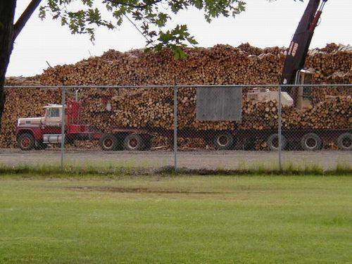 Piles upon Piles of Logs!