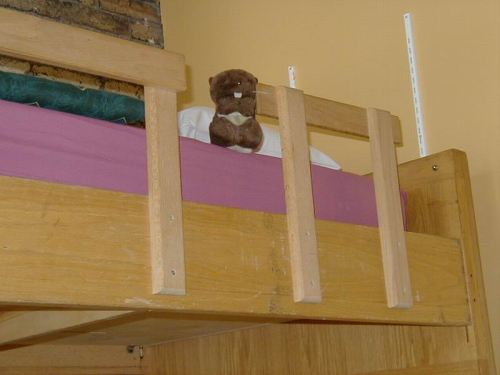 Basil with his own bunk!