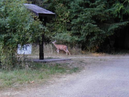 Elusive Deer!