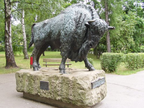 The only Bison that I saw!