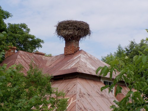 Not a Good Place for a Nest!