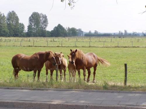 Nice Horses