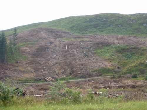 Scottish Clearcut!