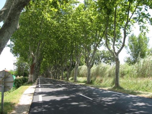 Beautiful Boulevards