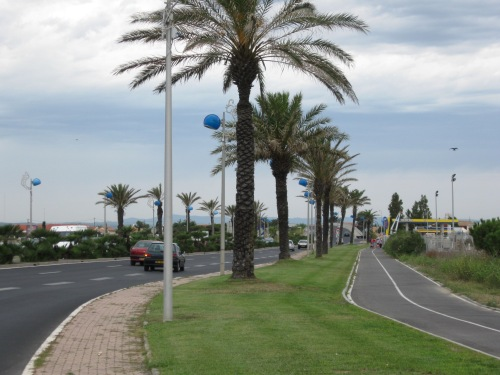 Palm Tree Lined Route