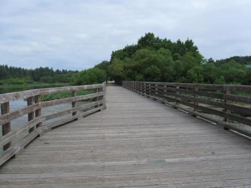 Blenkinsop Trestle on the Lochside Trail