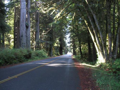 Riding Through the Redwood Forest