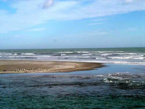 Penguin & Ocean Vistas