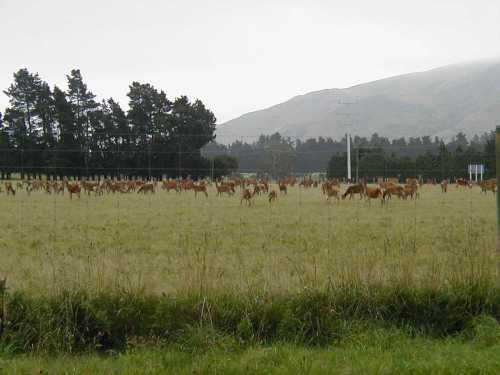 Deer Farms a Plenty!