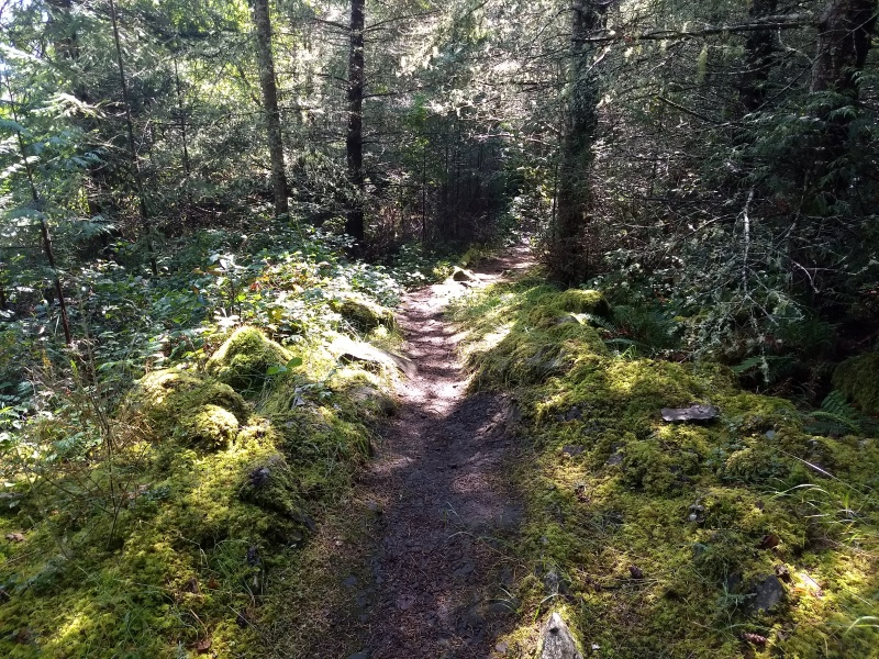 Trail to Canal Road