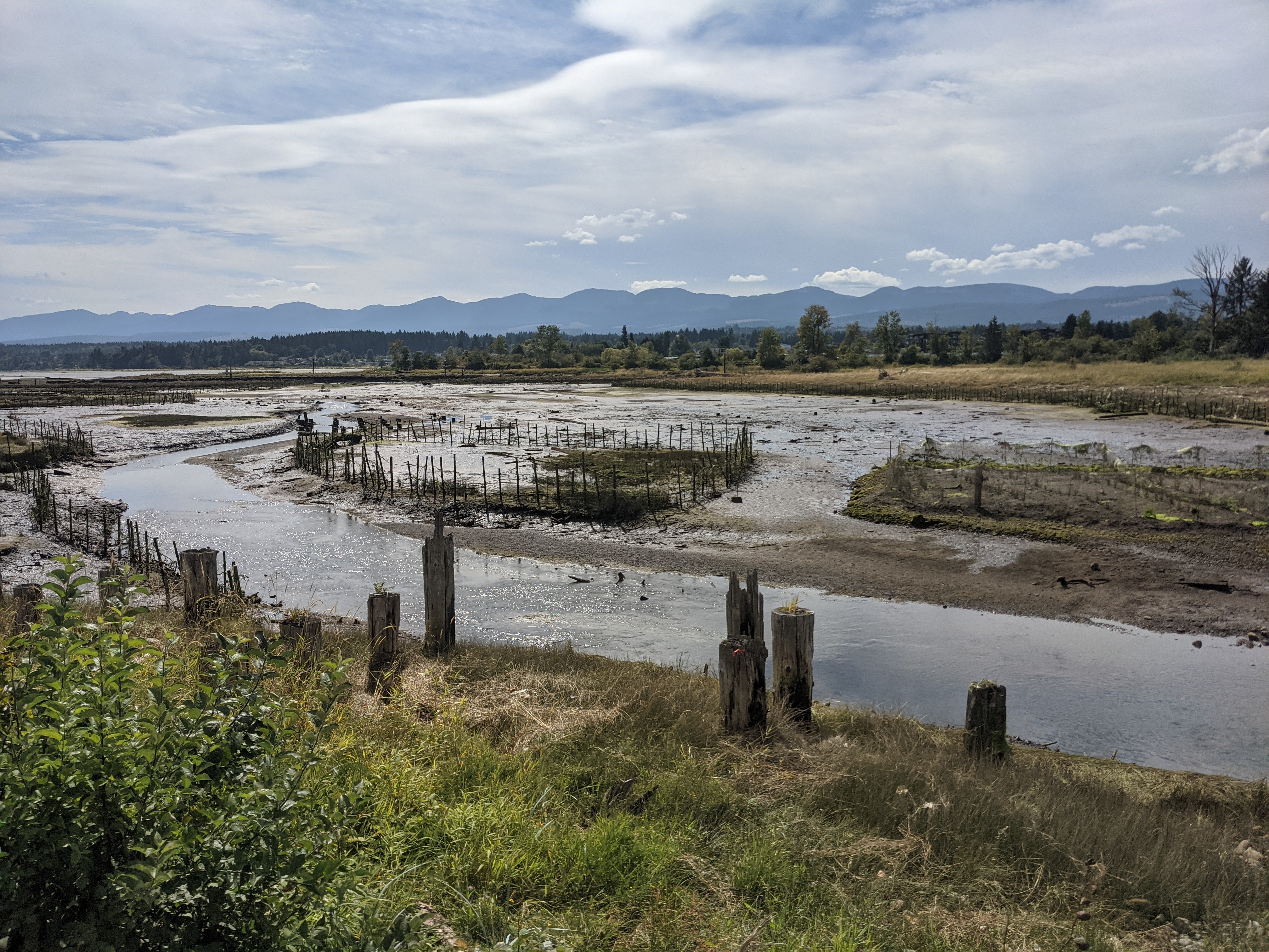 Remains of Fish Traps - Courtenay River